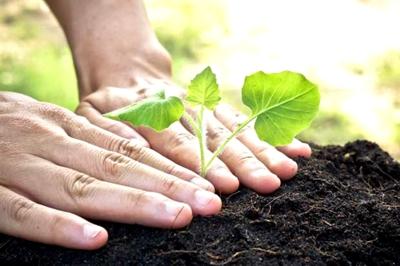 Planta un árbol, siembra vida - ESE Norte 2 - Más Humana y Pública